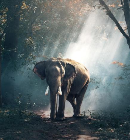 Hay un elefante en la habitación (y puede matarte)